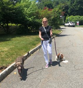Laura walking her dogs