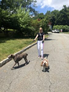 Laura Schreiber Walking Dogs Violet and Daisy