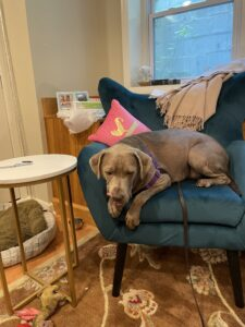 New Velvet Chair